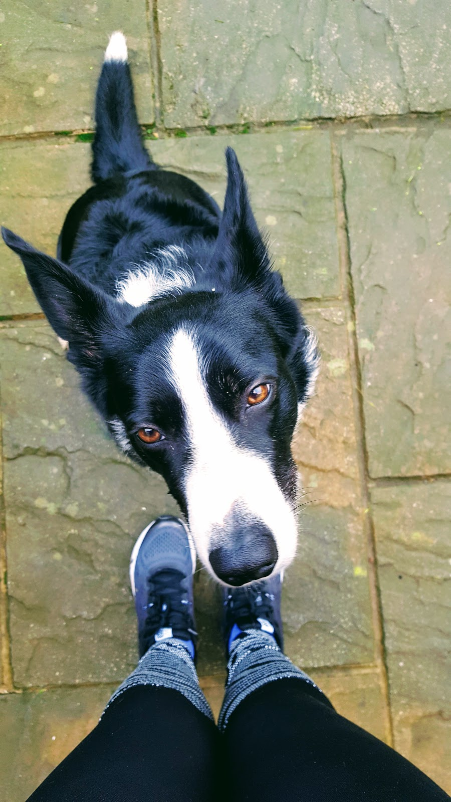 Happy Pet Day: Mollie The Border Collie