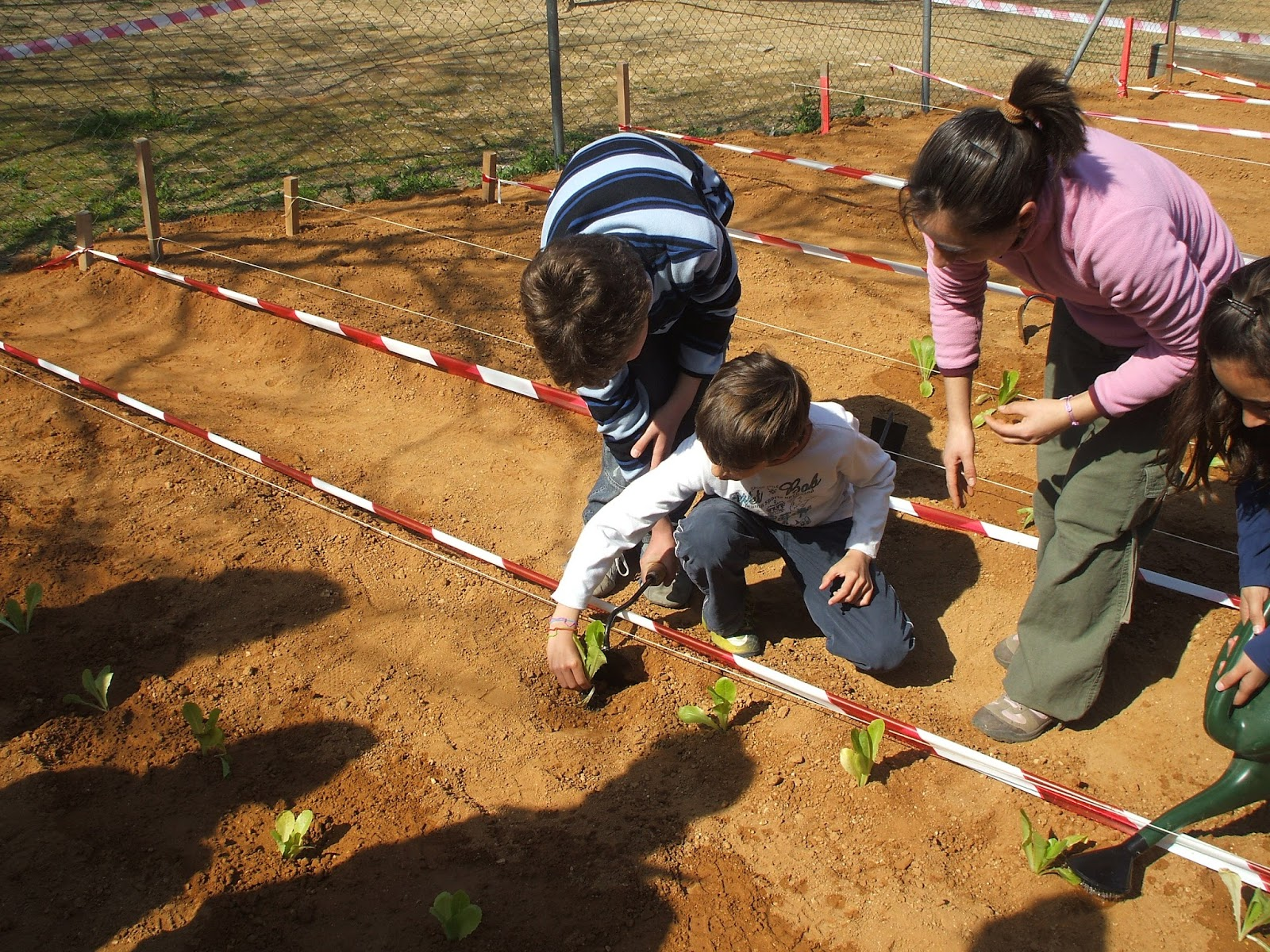 Como crear un huerto escolar desde cero colegio3punto0 for Que es un huerto escolar