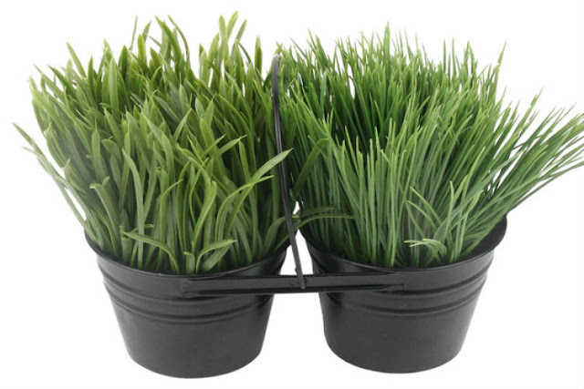 artificial grass plant