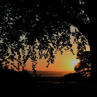 A sunset with the silhouette of a tree branch and leaves in the foreground