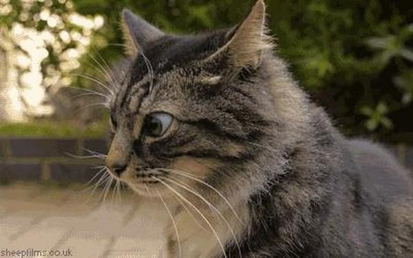 """Bộ mặt ngáo ngơ của những chú mèo """"hit cỏ"""" xem là cười muốn rụng rốn"""