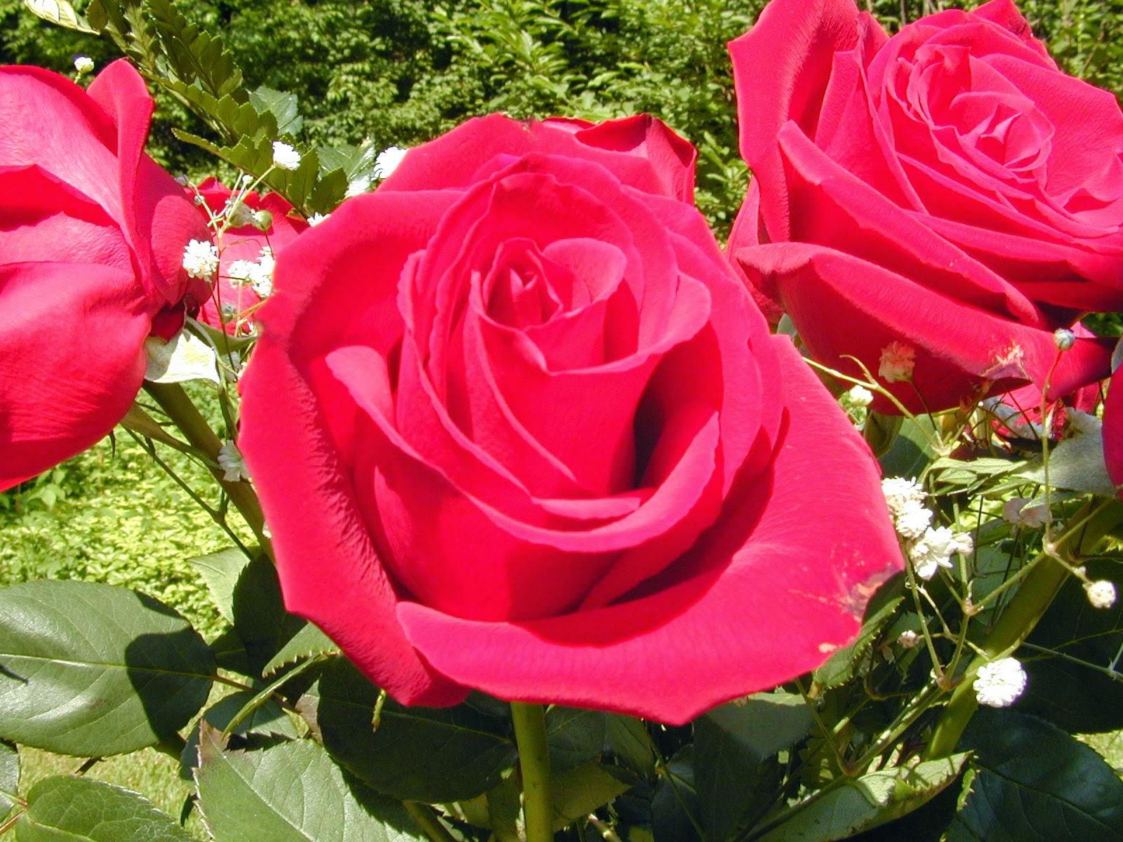 Best Wallpaper: Beautiful Flowers Hd Wallpapers Free Download