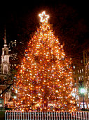 sapin de noel Boston