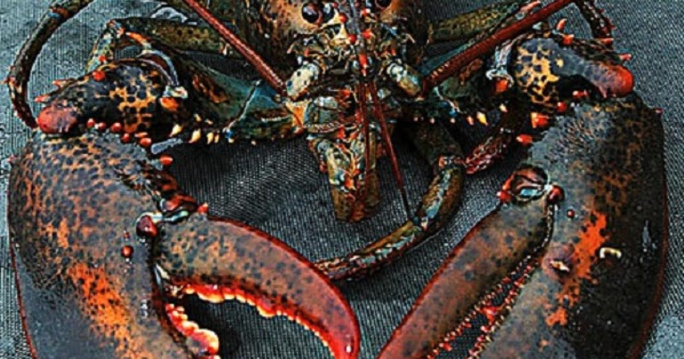 Reasons Why You Use Live Lobster Supplier Singapore Service - Live