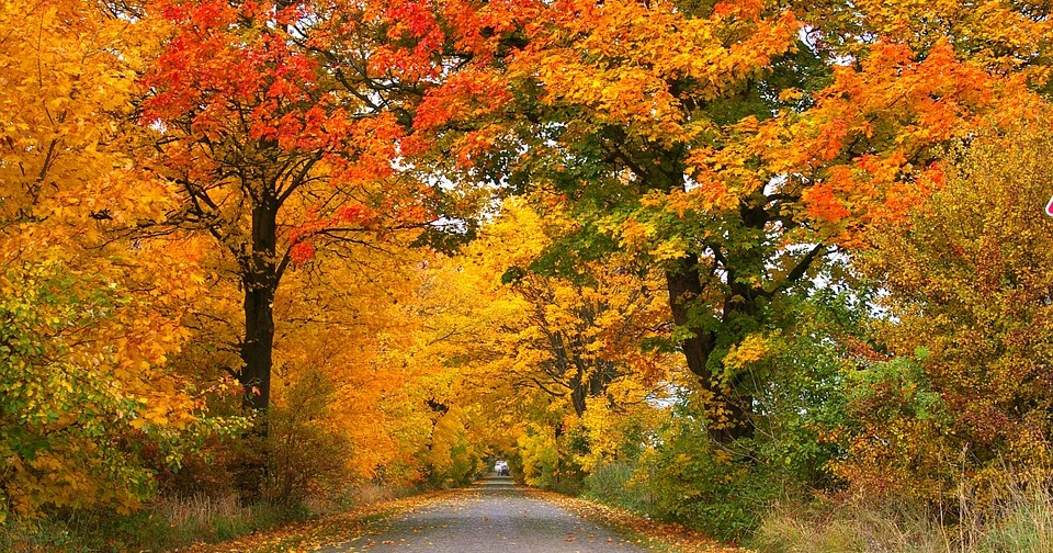Le 10 cose che rendono l'autunno la stagione più bella in assoluto
