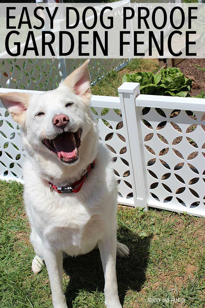 Is your dog getting into your backyard garden? Install this easy garden fencing to keep your dogs away so you can enjoy your garden in peace! Love this gorgeous, afforable, and easy to install option for families with gardens & dogs!