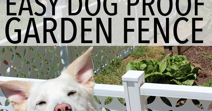 Easy Dog Proof Garden Fence Sunny Day Family