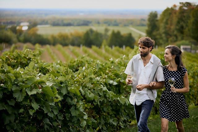 la route des vins Brome-Missisquoi vignobles québec
