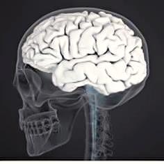 Gambar 4 Jenis Makanan Terbaik Untuk Kecerdasan Otak