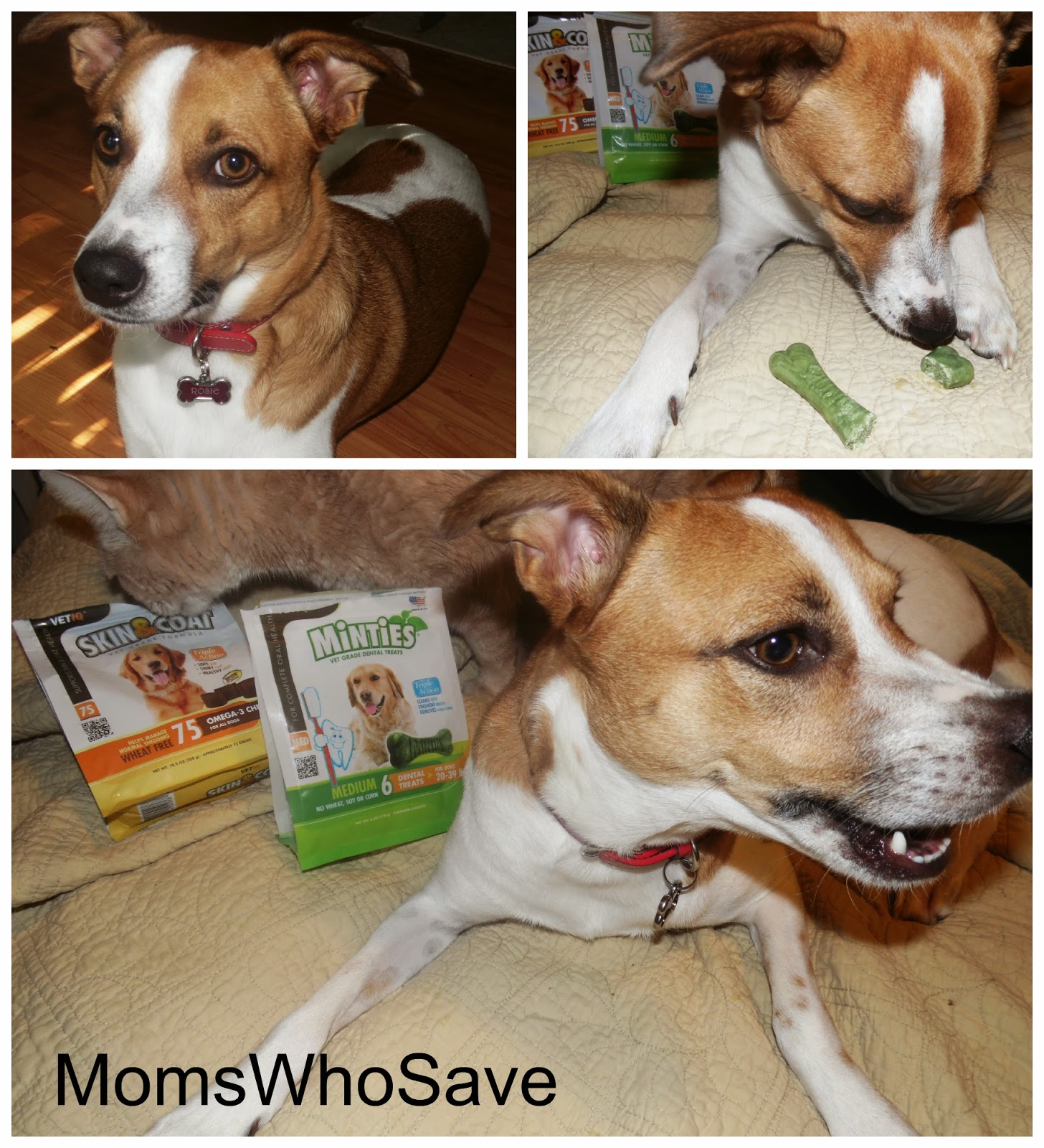 VetIQ Skin & Coat Omega-3 and Minties Dental Treats -- Vet-Recommended Quality, Made in the USA