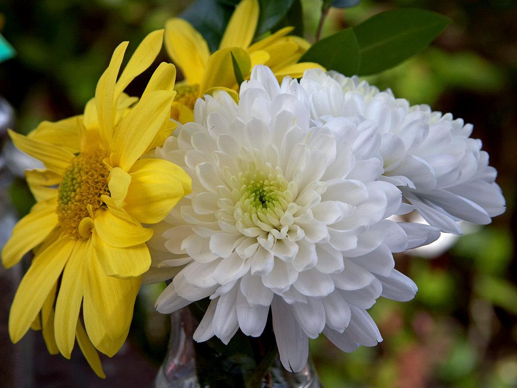 Types Of Flower Arrangements Chrysanths Flowers Dendranthema Grandiflora Tzvelev