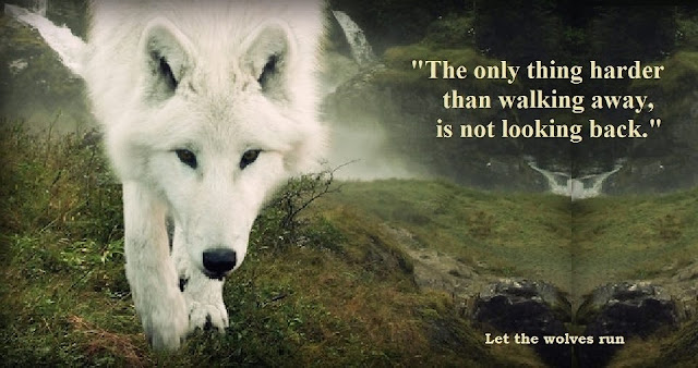The only thing harder than walking away, is not looking back. #quotes #wolf #walkingaway #relationships #relatable #wisdom #truth