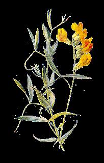 flower image digital illustration clip art