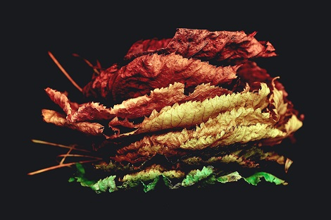 kunst van vragen stellen over de herfst