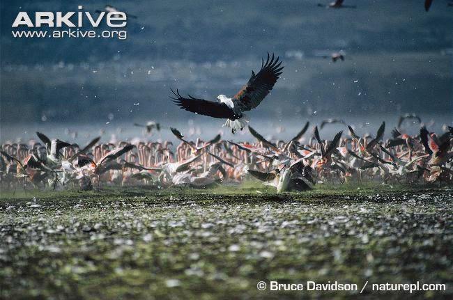 interactions between africans birds