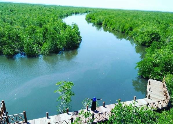 Hutan Mangrove Langsa, Wisata Paling Hits Untuk Foto-Foto