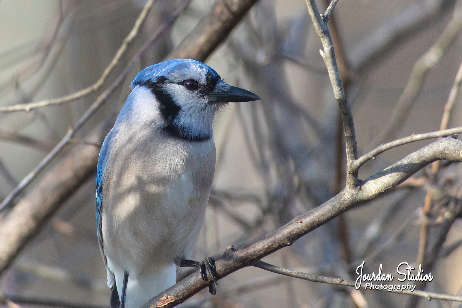 Jerry's Digiscoping Page: Digiscoping with the