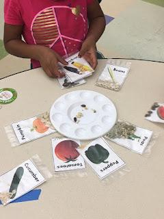 seed matching game