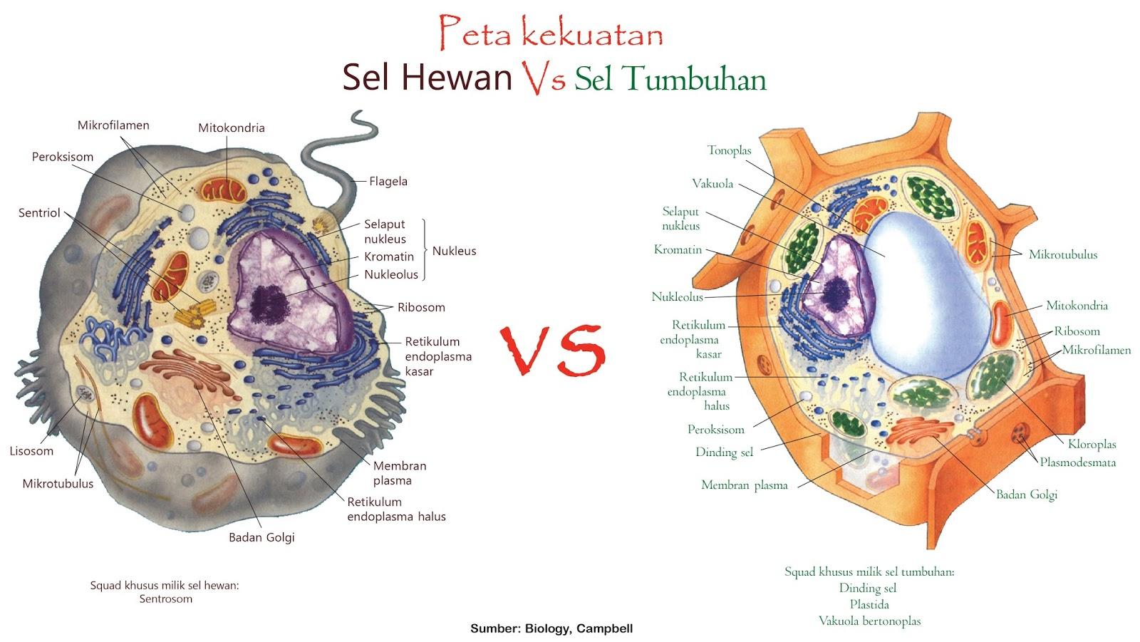 Perbedaan sel hewan dan tumbuhan dilihat dari berbagai ...