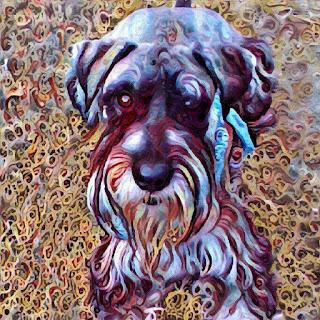 Standard Schnauzer Breeder North Carolina Standard Schnauzer Breeder NC Standard Schnauzer puppies NC Standard Schnauzer puppies North Carolina