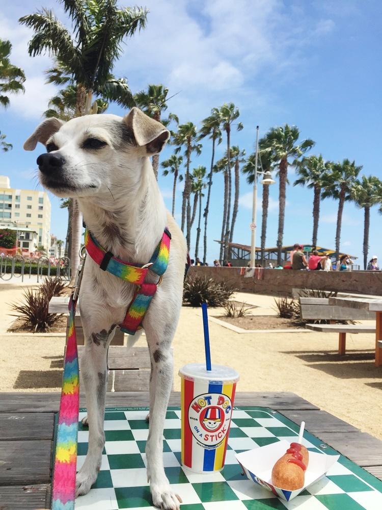 hot dog on a stick, santa monica, california