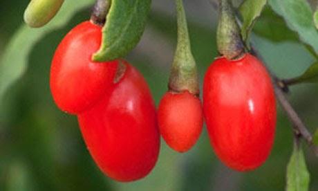 10 Khasiat Goji Berry untuk Kesehatan