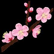 杏の花のイラスト