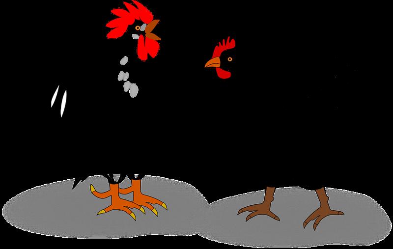 Imágenes Y Gifs Animados Imágenes De Gallos Y Gallinas