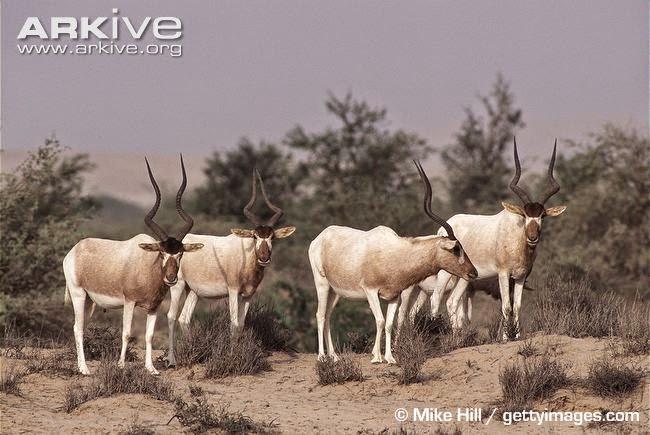endangered african mammals