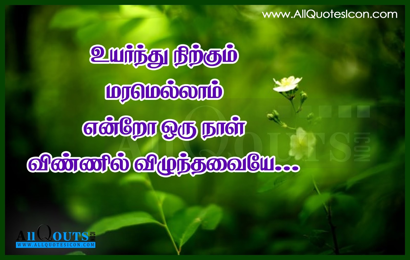 Beautiful Life Quotes With Images In Tamil Labzada Wallpaper
