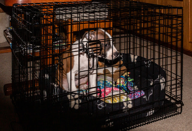 Photo of Ruby in her cage on the way back to the marina