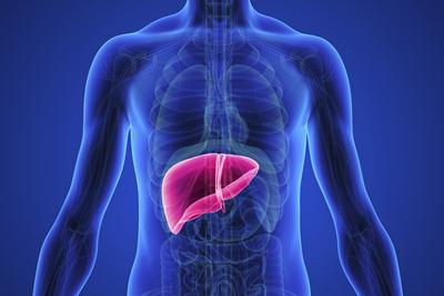Cara Mengobati Liver dengan Daun Sukun