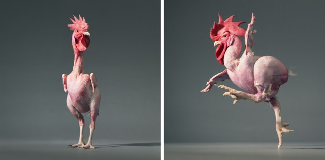 similar-genetically-chickens-humans
