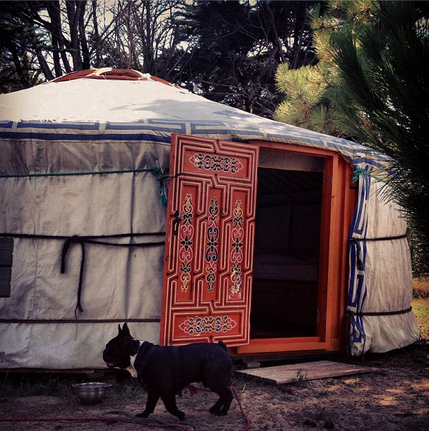 camping en yourt avec notre bouledogue français Bob