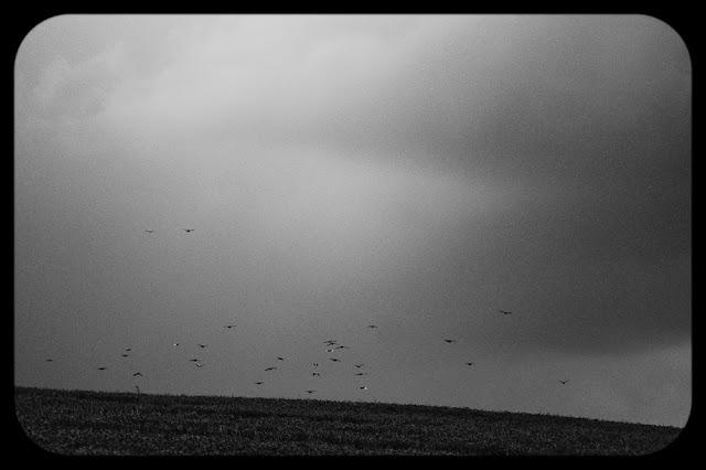 Czarno-biała fotografia krajobrazu. Ptaki. fot. Łukasz Cyrus