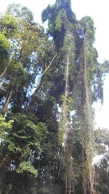 деревья над рекой Сок
