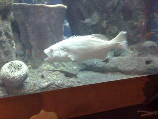 big+fish