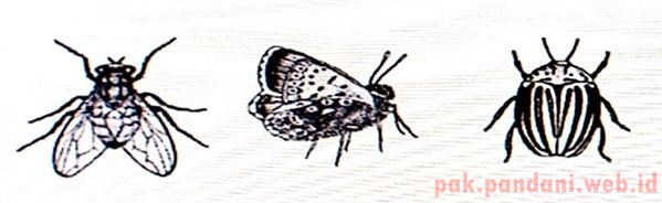 7600 Koleksi Gambar Kelompok Hewan Invertebrata Gratis Terbaik