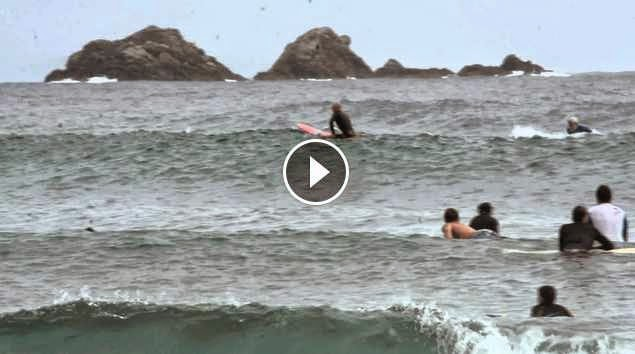 Spectacular Dolphin Surfing at Byron Bay