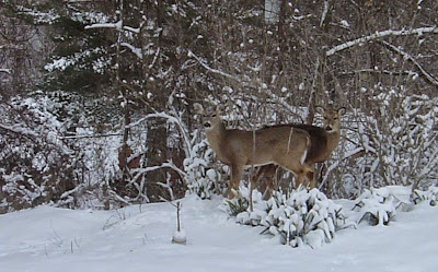 two deers.jpeg