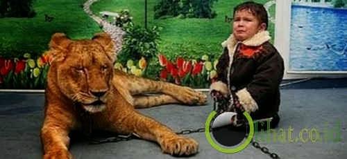 Foto bersama singa