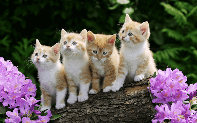 Cute Kittens HD Wallpaper Photo Pics and Images