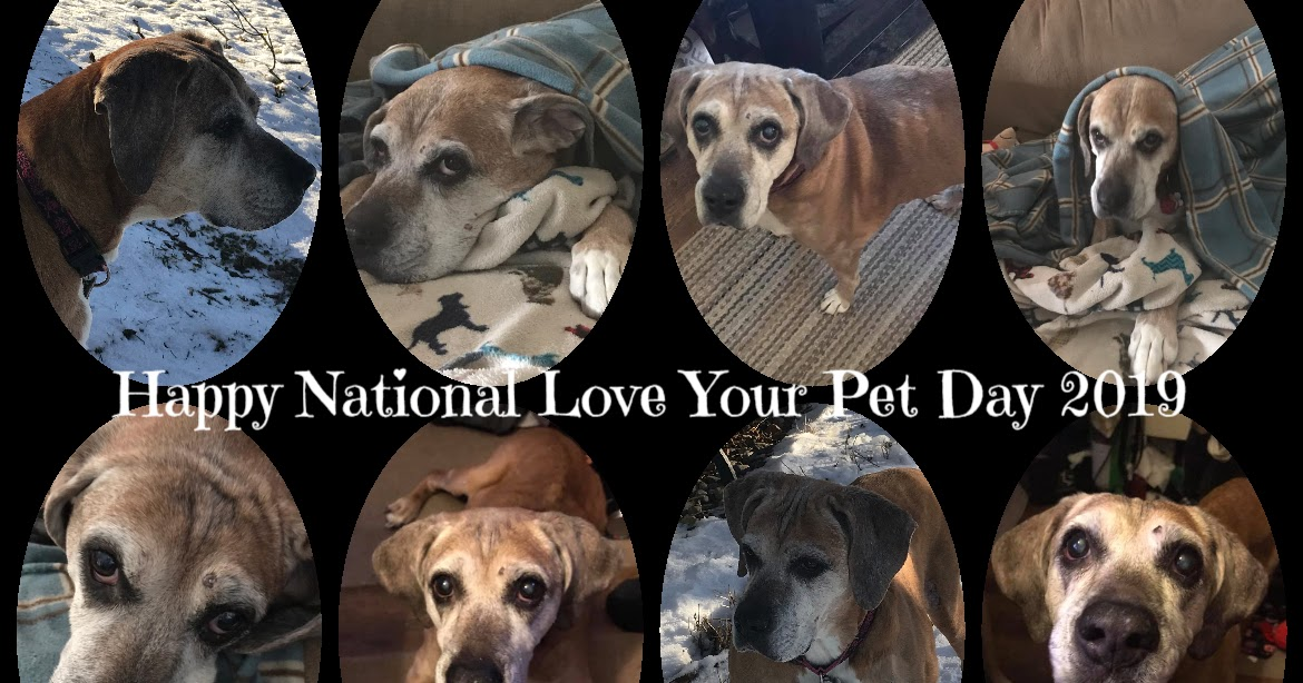 Moments of Introspection: Happy National Love Your Pet Day ...