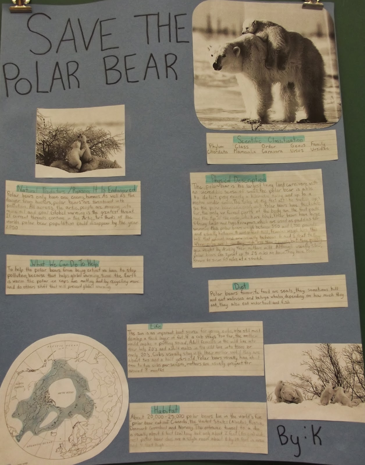 Room 13 Endangered Species Science Projects By Grade 6
