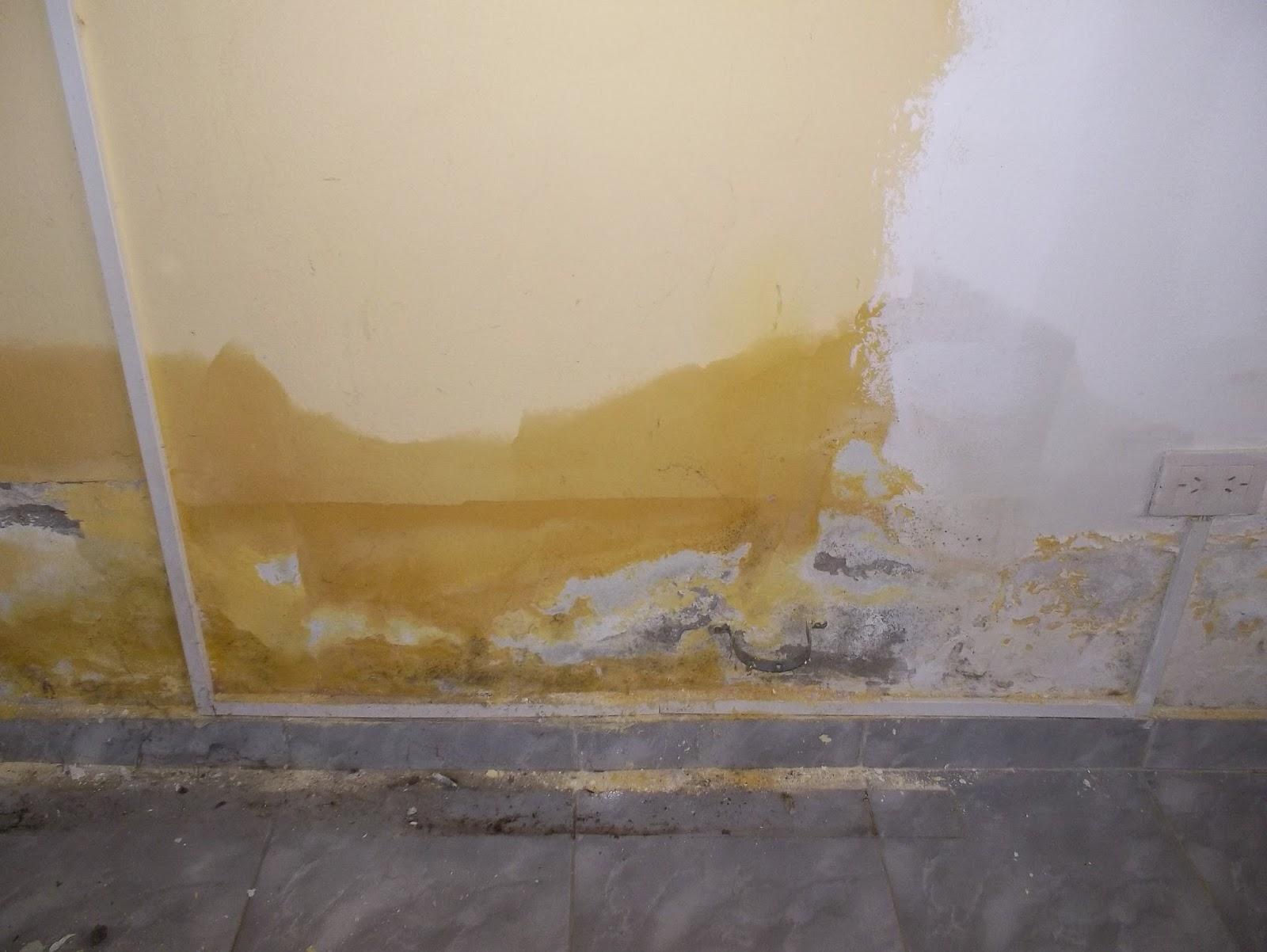 Construye tu placas de yeso en paredes con humedad for Humedad en paredes