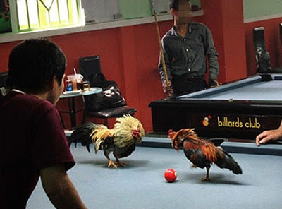 Cockfight on billiards table