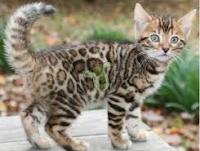 kumpulan kucing nakal