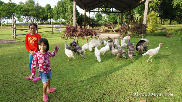Bantug Lake Ranch - Bacolod attractions - animal petting - turkey