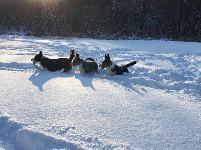 pies w górach, podróże z psem, karkonosze z psem