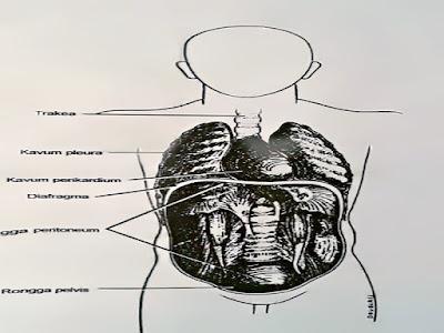 Gambar Penyebab Pilek Dan Infeksi Saluran Pernafasan Atas